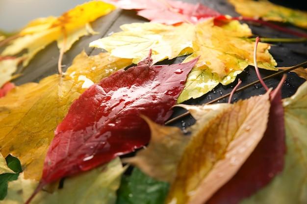 진짜 단풍은 빗방울에 누워 있습니다. 계절 사진. 질감이 있는 노란색과 녹색 색상입니다. 11월 엽서.