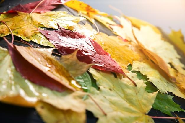 실제 단풍은 빗방울에 우산에 누워 있습니다. 계절 사진. 질감이 있는 노란색과 녹색 색상입니다. 11월 엽서. 나쁜 날씨에 산책.