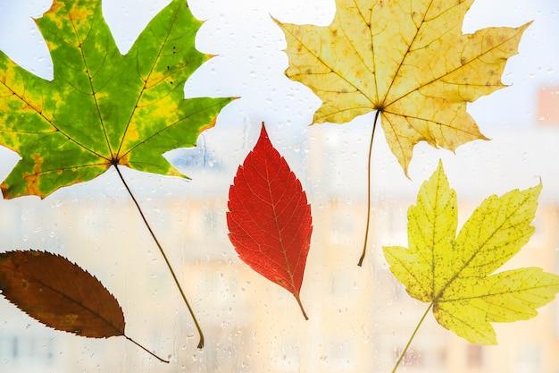 Настоящие осенние листья на окне. сезонное фото. желтые и зеленые цвета с текстурой. ноябрьская открытка. прозрачный фон. прекрасный вид на город.