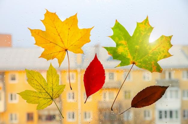 Настоящие осенние листья с каплями дождя на окне. сезонное фото. желтые и зеленые цвета с текстурой. ноябрьская открытка. прозрачный фон. прекрасный вид на город.