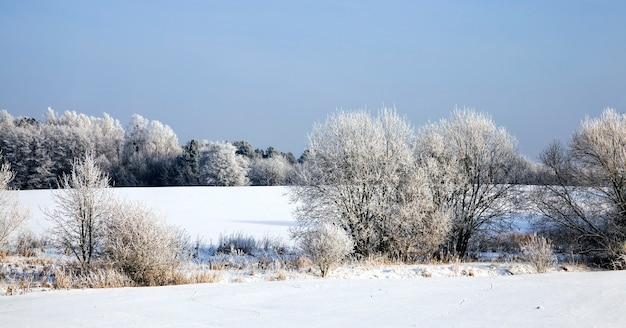 A real landscape in the winter time of the year with a bright bright park or forest where the trees are in frost and the soil is covered with deep snow