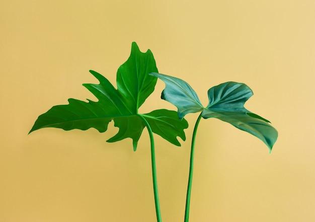 パステルカラーの背景に本物の葉。植物の熱帯パターンのデザインコンセプト。