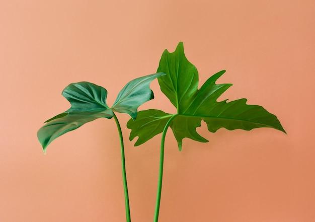 Real leaves on pastel color background.botanical tropical pattern design concepts.