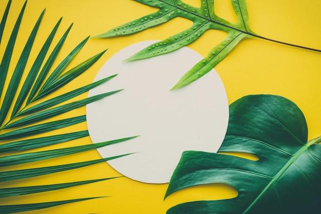 Реальные листья с белой копией космического фона. дизайн концепции тропической ботанической природы.