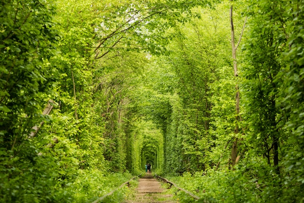 Real natural wonder love tunnel created from trees along the railway ukraine, klevan