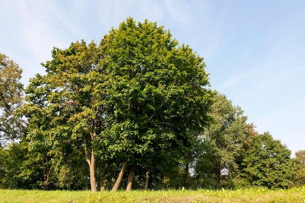 푸른 나무와 잔디가 햇빛에 비추는 진정한 자연, 진정한 휴식과 자연의 산만 함, 신선한 휴식과 공기