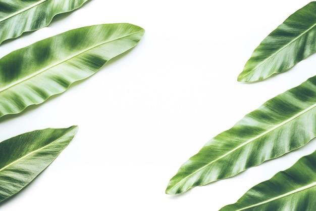本物の熱帯の葉は平らに白に横たわっていた。