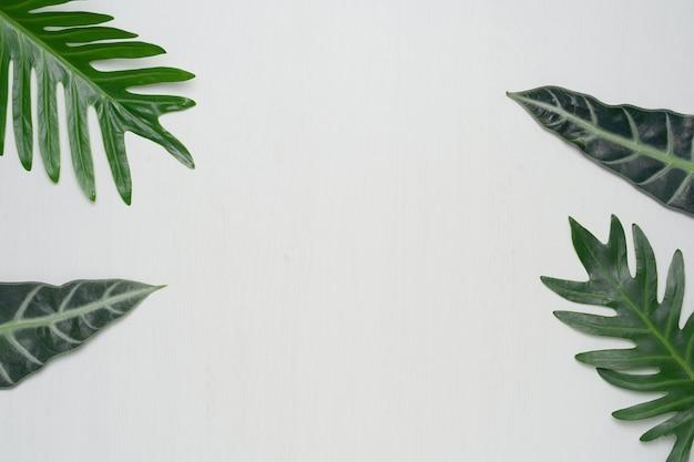 흰색 나무 배경에 실제 열 대 잎