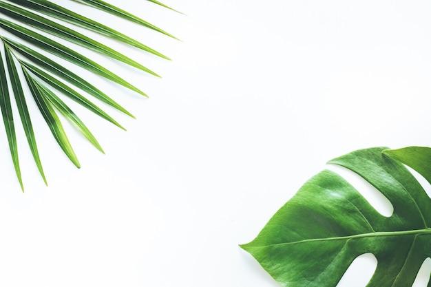 本物の熱帯の葉は白でパターンの背景を設定します