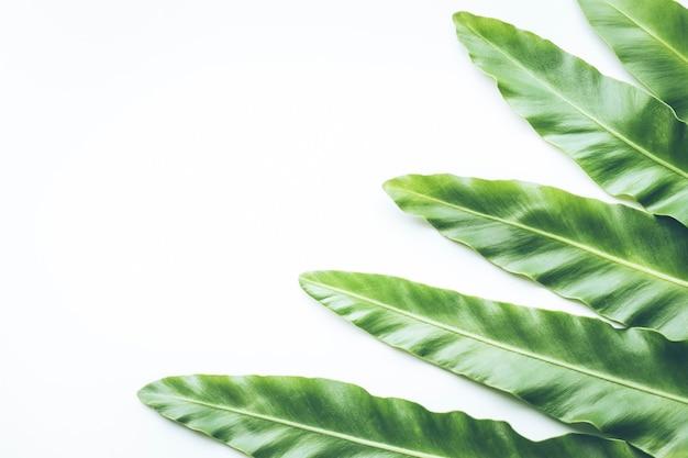 Настоящие тропические листья на белом