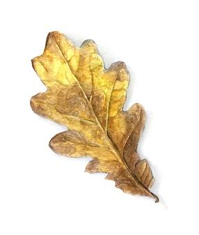 Realisitc oak leaf vintage watercolor illustration