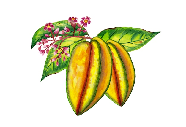 Realistic colorful carambola branch with leaves and flowers
