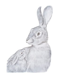Realistic drawing of gray mother rabbit and her baby hand-drawn