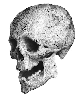 人間の頭蓋骨のリアルな描画。モノクロイラスト。