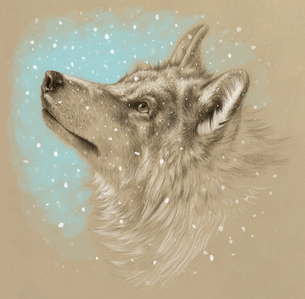 Realistic drawing of a wolf head. winter with snow. pencil drawing on tinted paper.