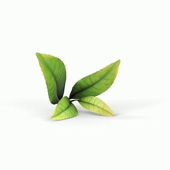 분기 격리 된 흰색 배경에 현실적인 녹색 올리브. 3d 그림, 디자인 프로젝트에 적합합니다.