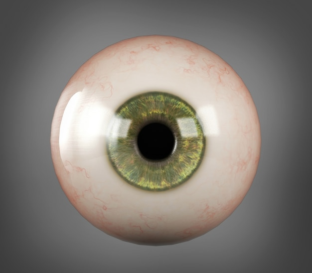 Realistic human eyeball green iris pupil isolated