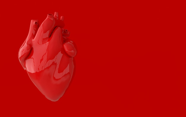 Realistic human heart organ with arteries and aorta 3d rendering