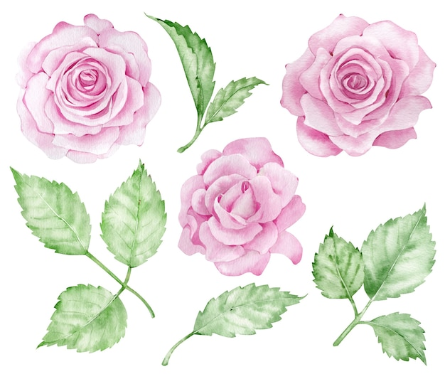 Realistic pink roses clipart