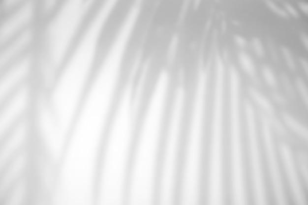 Реалистичные тропические листья с естественным эффектом наложения тени на белый текстурный фон для наложения на презентацию продукта, фон и макет