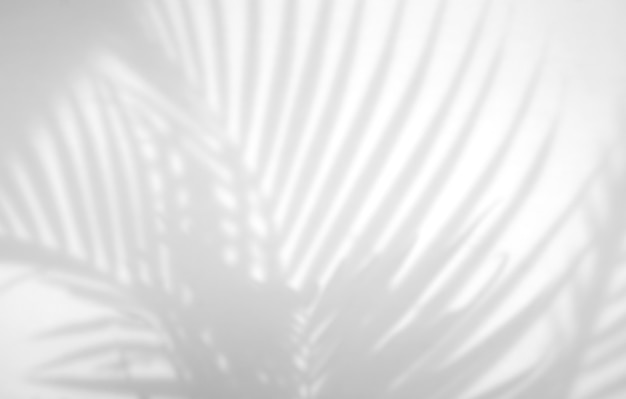 Realistic tropical leaves shadow overlay effect on white wall