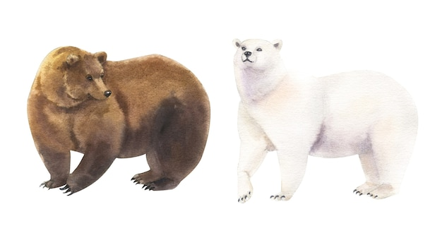 Realistic watercolor set of brown and polar bears on white background
