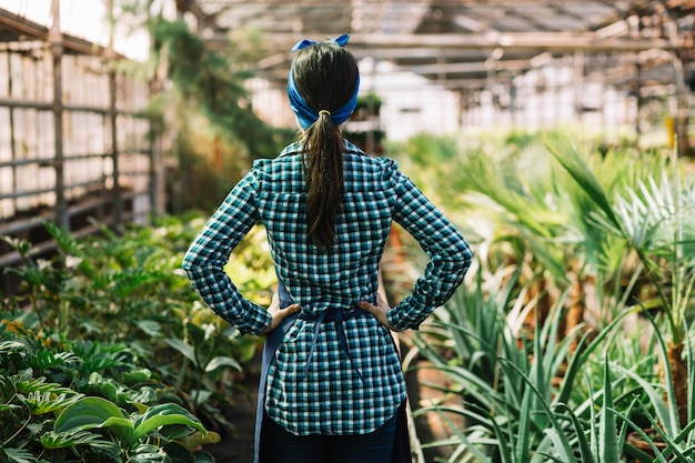 Rear view of a female gardener standing in greenhouse