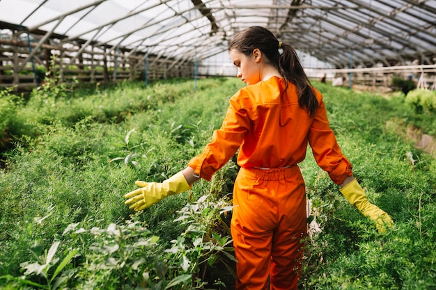 Rear view of a female gardener touching plants in greenhouse