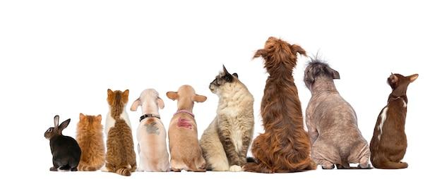 Вид сзади группы домашних животных, собак, кошек, кроликов, сидя, изолированных на белом