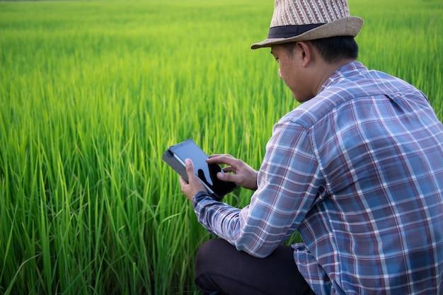 녹색 유기농 논에서 야외에서 디지털 태블릿을 사용하는 아시아 스마트 농부의 후면보기.