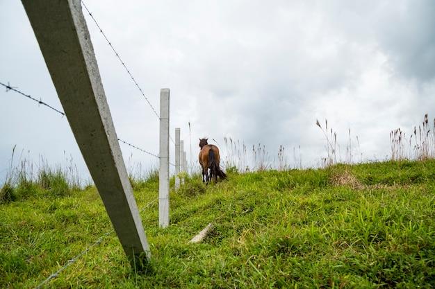 フェンスの近くのガラス畑に立っている馬の後姿