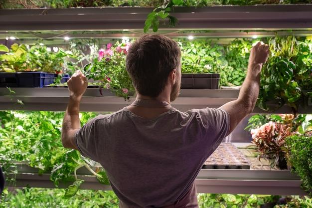 식물의 선반에 서서 잎 상태를 확인하는 남성 온실 재배자의 후면보기