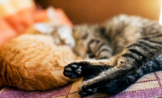 Вид сзади двух кошек, лежа на кровати и спать сосредоточиться на задних ногах.