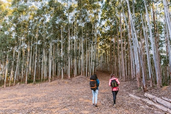 Rear view of two women exploring dense forest