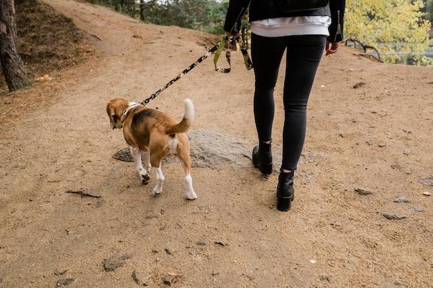 Вид сзади молодой случайной хозяйки щенка бигля и домашнего питомца, движущихся по лесной дороге, отдыхая вместе