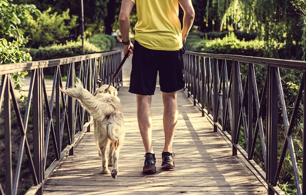 Rear view of sportive man jogging across park bridge with golden retriever dog in summer