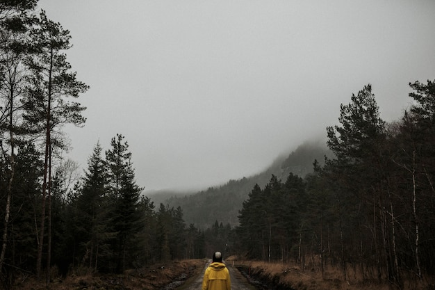 Rear view of a woman in a yellow windbreaker standing in a misty forest Premium Photo