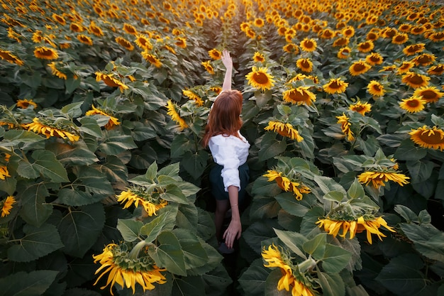 Rear view of a young girl in the middle of a rural area of sunflowers at sunset.