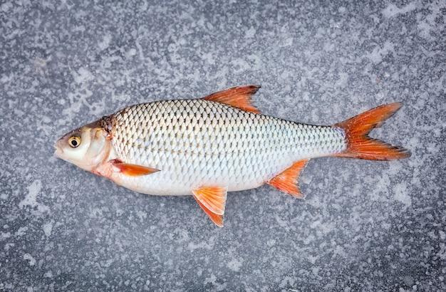 Недавно выловленная свежая рыба, лежащая на холодном льду.