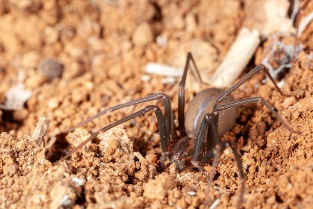 自然の生息地でクモを退ける-危険な有毒クモ