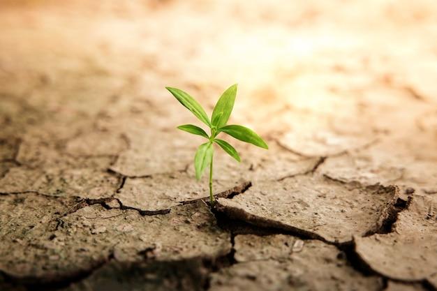 삶이나 비즈니스 개념의 회복과 도전. 경제 위기 기호 또는 생태 시스템. 금이 간 토양 땅에서 새로운 새싹 녹색 식물 성장
