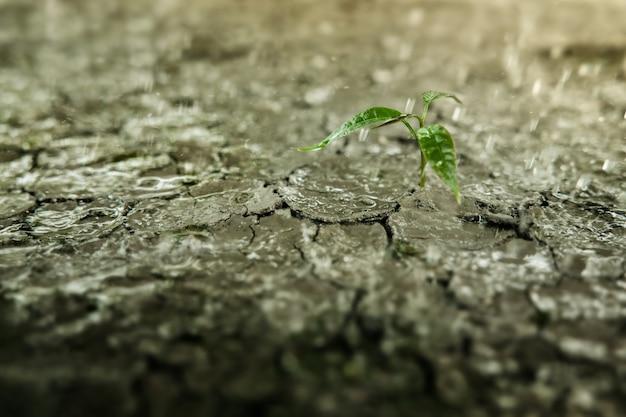 삶 또는 비즈니스 개념의 회복 및 도전. 경제 위기 기호 또는 생태 시스템. 새로운 새싹 녹색 식물에 비가 내리고 있습니다. 금이 간 토양 땅을 배경으로