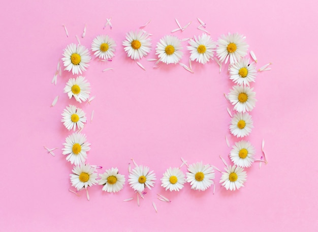 Rectangular daisies frame on a light pink background top view