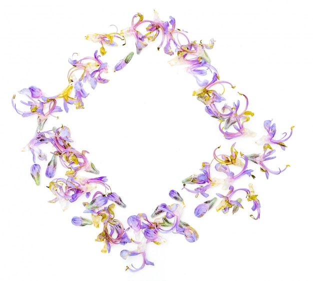 フレッシュローズマリーの繊細な紫の花が入った長方形のフレーム(正方形)。白い背景で隔離されました。