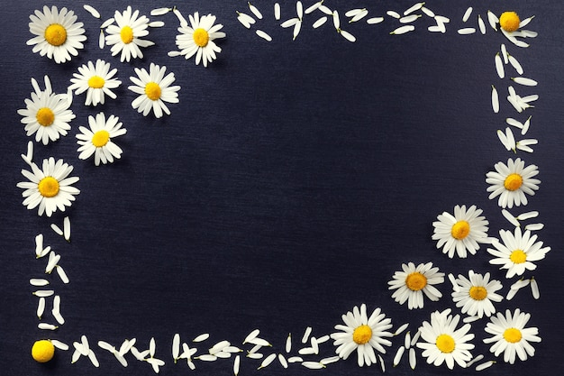 Rectangular frame of white daisies on a black background  floral pattern with copy space lay flat  flowers top view