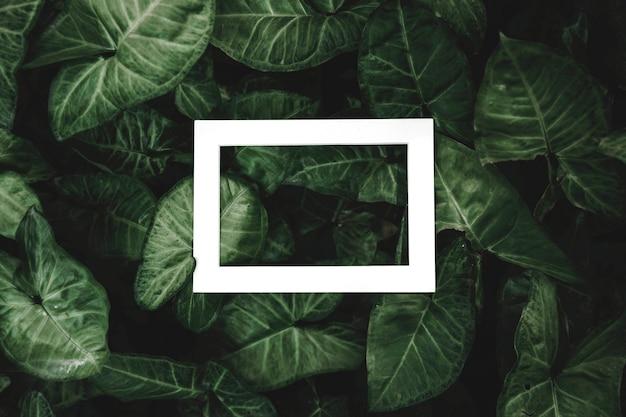 Cornice bianca hallow rettangolare sullo sfondo di foglie