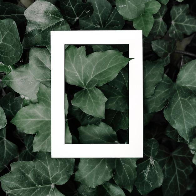 Rectangular white photo frame on green leaves