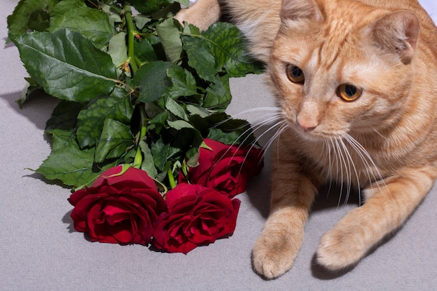 Red 6 weeks old cat with lying near pink flowers