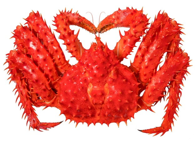 Red alaskan king crab isolated in white background,norwegian taraba king crab on white (without shadow)