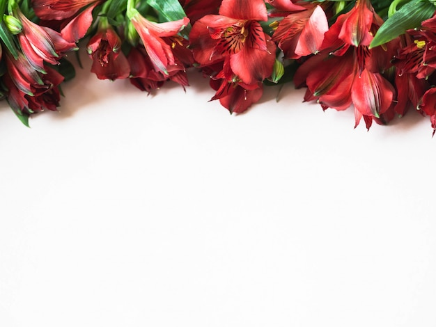 Red alstroemeria flowers border on white background top view